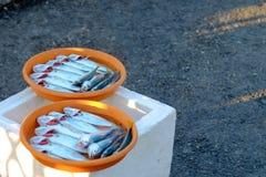 Venda das sardinhas dos peixes da captura do pescador Imagens de Stock Royalty Free