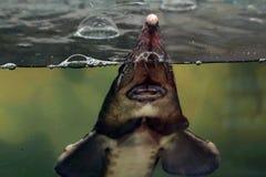 Venda de peixes vivos Fotografia de Stock Royalty Free