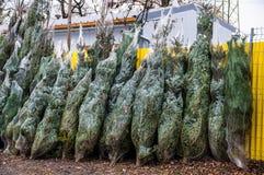 Venda do Natal de árvores tradicionais Fotografia de Stock Royalty Free