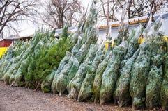 Venda do Natal de árvores tradicionais Imagem de Stock