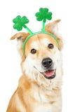 Venda feliz del trébol del día del St Patricks del perro fotos de archivo libres de regalías