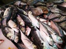 A venda fresca do marisco descaroça o mercado imagens de stock royalty free