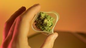venda ilegal da marijuana em Europa e em Rússia nPlans para a legalização para 2018 foto de stock