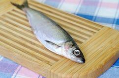 Vendace för ny fisk på en skärbräda royaltyfria foton
