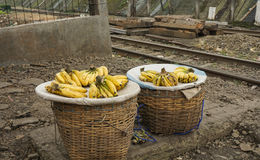 Vendant la banane en tant que fruit tropical préféré Bogor rentré par photo du ` s de l'Indonésie photo libre de droits