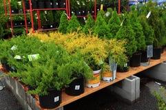 Vendas de plantas do berçário Imagens de Stock Royalty Free
