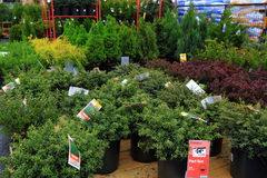 Vendas dos arbustos Fotos de Stock Royalty Free