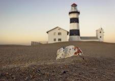 Vende conchas do mar na costa de mar foto de stock