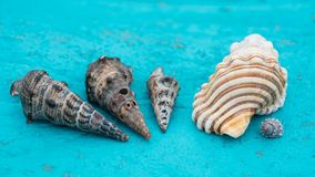 Vende escudos do mar fotografia de stock royalty free