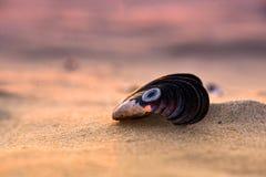 Vende shell do mar pela costa de mar Descanso nesta praia sereno e observação do por do sol bonito Foto de Stock Royalty Free