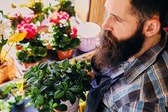 Vendedor barbudo brutal de la flor con los tatuajes en sus brazos en un flowe fotografía de archivo libre de regalías