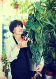Vendedor de la mujer que demuestra la maceta con la planta del pothus Fotos de archivo
