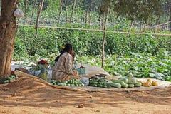 Vendedor de las verduras frescas del borde de la carretera en la India Foto de archivo libre de regalías