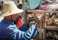 Vendedor de los polluelos Imagenes de archivo
