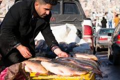 Vendedor dos peixes em Iraque Fotos de Stock