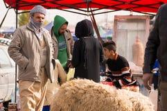 Vendedor iraquiano dos carneiros Foto de Stock Royalty Free