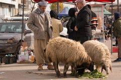 Vendedor iraquiano dos carneiros Fotografia de Stock Royalty Free