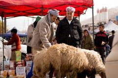Vendedor iraquiano dos carneiros Imagens de Stock Royalty Free