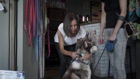 Vendedor que intenta en el cuello en perro esquimal metrajes