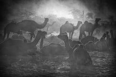 Vendedores do camelo da cidade de Pushkar, Pushkar Mela fotos de stock royalty free