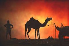 Vendedores do camelo da cidade de Pushkar, Pushkar Mela Fotografia de Stock