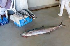 Vendendo atuns frescos no mercado em Ásia imagens de stock