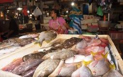 Vendendo peixes Imagens de Stock Royalty Free