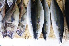 Vendendo peixes fotos de stock