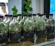 Vendendo plantas pequenas nas garrafas de vidro foto de stock royalty free
