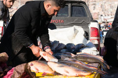 Vendeur de poissons en Irak Photos stock