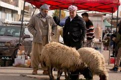 Vendeur irakien de moutons Photos libres de droits