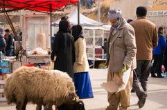 Vendeur irakien de moutons alimentant ses moutons Photos libres de droits