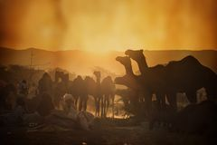 Vendeurs de chameau de la ville de Pushkar, Pushkar Mela Images libres de droits