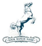 Vendimia de la escritura de la etiqueta del caballo Imagenes de archivo