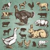 Vendimia de los animales del campo fijada () Foto de archivo