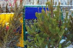 Vendita all'aperto degli alberi di Natale di Frsh Immagini Stock Libere da Diritti