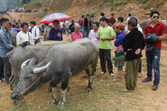 Vendita del bestiame Immagini Stock