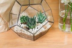 Vendita del negozio di fiore, piccoli cactus in vaso di vetro Immagini Stock