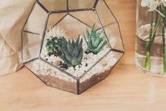 Vendita del negozio di fiore, piccoli cactus in vaso di vetro Fotografie Stock Libere da Diritti