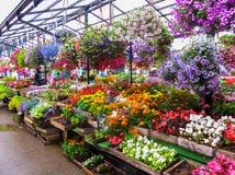 Vendita delle piantine del fiore sul mercato a Riga latvia fotografia stock