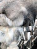 Vendita di pelliccia sul mercato Un mucchio della pelliccia delle pecore e di altri animali Cuoio fotografie stock libere da diritti
