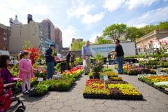 Vendita di pianta all'aperto Fotografia Stock Libera da Diritti