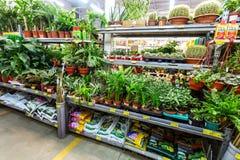 Vendita le piante in vaso e dei fiori immagini stock libere da diritti