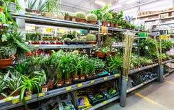 Vendita le piante in vaso e dei fiori immagine stock