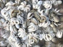 Vendite dei frutti di mare al mercato in Tailandia Immagine Stock