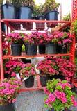 Vendite del fiore della primavera fotografia stock