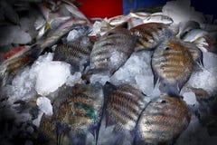 Vendite del pesce sul bordo fotografia stock libera da diritti