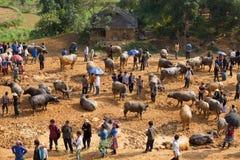 Vendite di esercenti vietnamite e comprare del bufalo d'acqua Immagini Stock