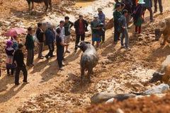Vendite di esercenti vietnamite e comprare del bufalo d'acqua Fotografia Stock Libera da Diritti