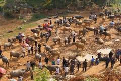 Vendite di esercenti vietnamite e comprare del bufalo d'acqua per le attività di agricoltura Immagine Stock